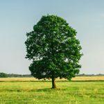 Tree Law